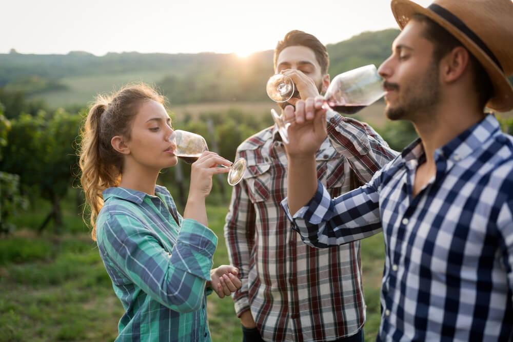 dégustation de vin en bourgogne